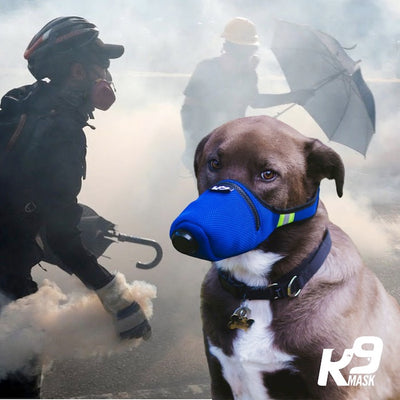 Pet Air Pollution Filters for Dogs in Tear Gas and Chemical Spray