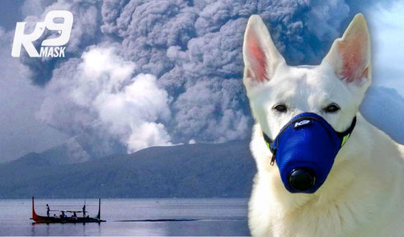 K9 Mask Extreme Protection Dog Air Mzzle Filter Ash, prodotti chimici, tossine