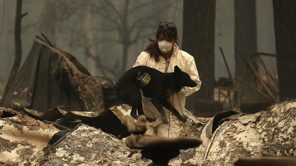 Wildfire smoke effects on health of dog lungs