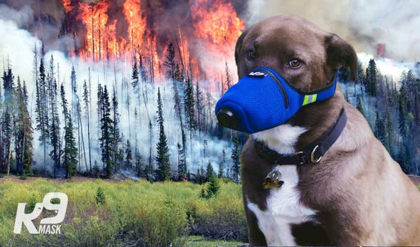 K9 Mask N95 Air Filter Pollution Mask for Dogs in Wildfire Smoke