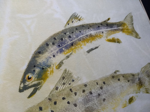 Brown Trout Pair. Original Gyotaku. 16x20
