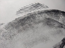 Load image into Gallery viewer, Walleye Original Gyotaku 24x36