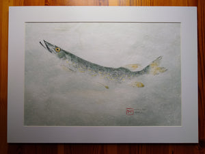 Northern Pike Original Gyotaku. 28x22