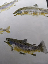 Load image into Gallery viewer, Brown Trout Original Gyotaku. Professionally Framed and to hang.