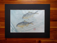Load image into Gallery viewer, Almaco Jack Original Gyotaku
