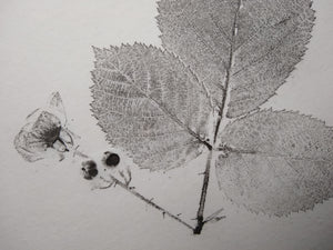 Original Blackberry Print: Oil-based ink on hemp rice paper. Hand-inked, pressed, and pulled.