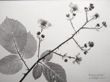 Load image into Gallery viewer, Original Blackberry Print: Oil-based ink on hemp rice paper. Hand-inked, pressed, and pulled.