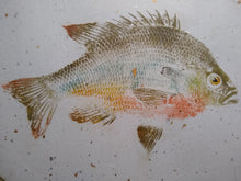 Load image into Gallery viewer, Redbreast Sunfish on Gold and Silver Leaf Chiri. 40x32 Original gyotaku.