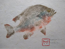 Load image into Gallery viewer, Redbreast Sunfish Original Gyotaku 11x14