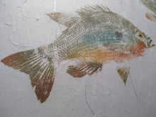 Load image into Gallery viewer, Redbreast Sunfish Pair Original Gyotaku 16x20