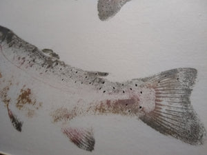 School of Rainbow trout original gyotaku. 20x24