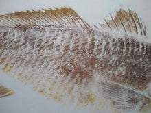 Load image into Gallery viewer, Red Drum (Redfish)  Original Gyotaku 24x30