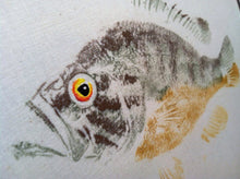 Load image into Gallery viewer, Warmouth Sunfish Original Gyotaku