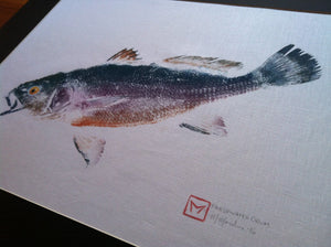 Original Gyotaku Freshwater Drum on Linen