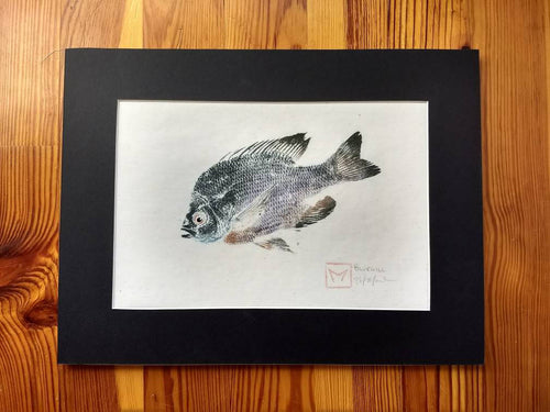 Original Gyotaku Bluegill