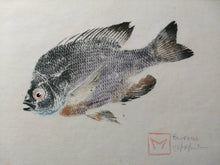 Load image into Gallery viewer, Original Gyotaku Bluegill