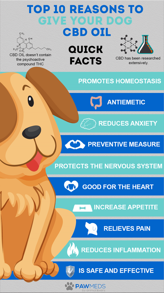 Top 10 Reasons To Give your Dog CBD Oil
