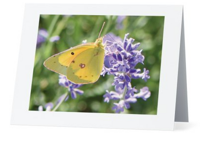 Lavender Notecards