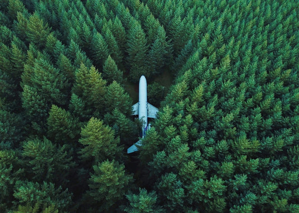 Forest Plane