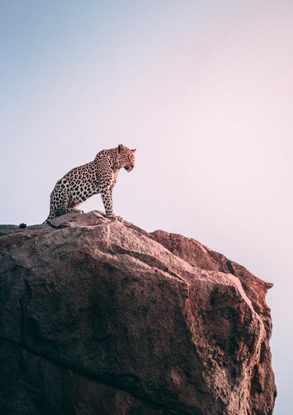 Leopard on Cliff