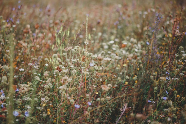 American Gypsy Herbalist, Creating Value Out Of Your Land, Culture Blog, Field of Wildflowers, Unsplash