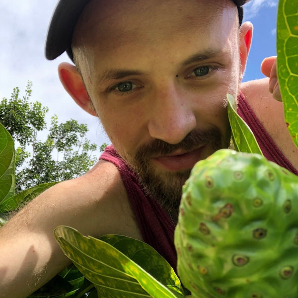 Stephen Huggins- Noni Fruit Morinda Citrifolia Blog on American Gypsy Herbalist