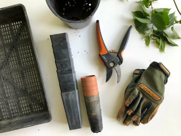 American Gypsy Herbalist- Tools Photo from Unsplash.com