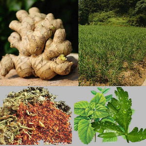Amazing Herbal Ginger Patch (10 PCS)