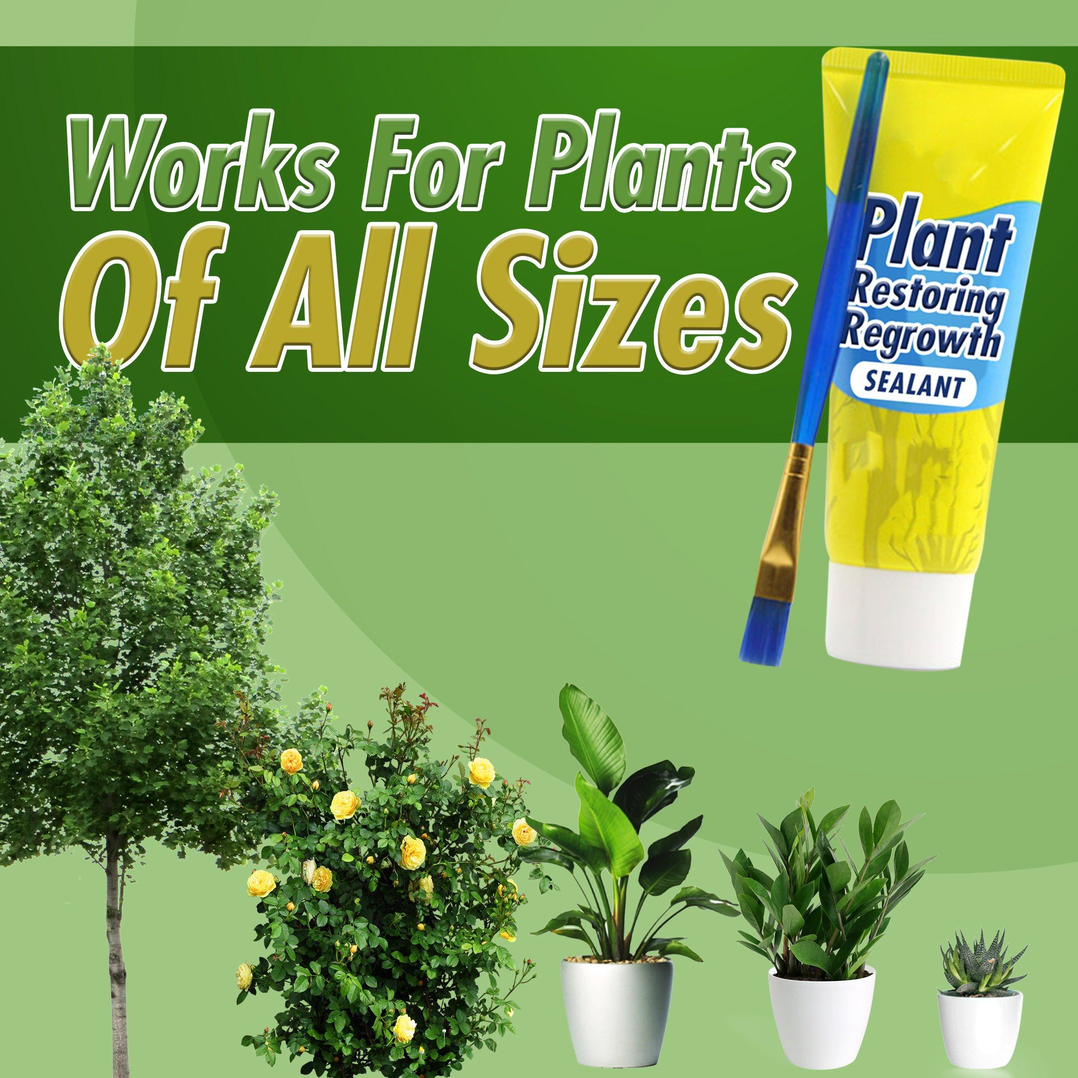 Plant Restoring Regrowth Sealant