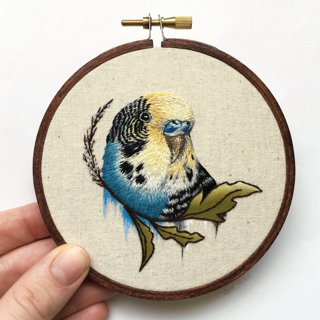 Blue and Yellow Budgerigar
