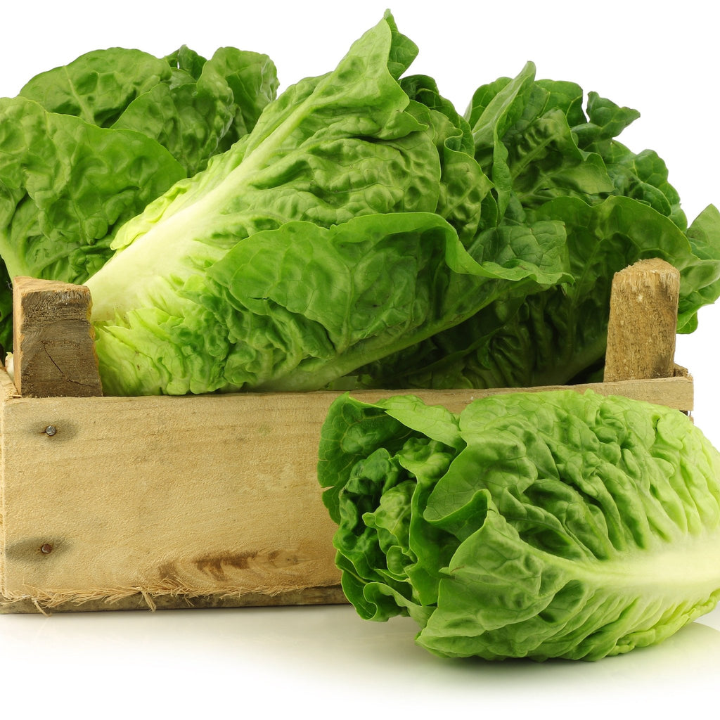 Little Gem Lettuce (Single) - Romaine Calm Scotland