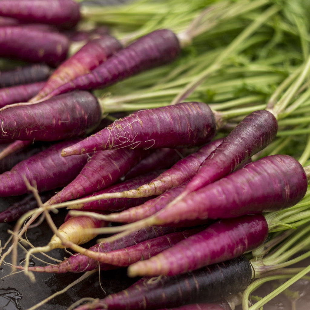 Purple Carrot (500g) - Romaine Calm Scotland