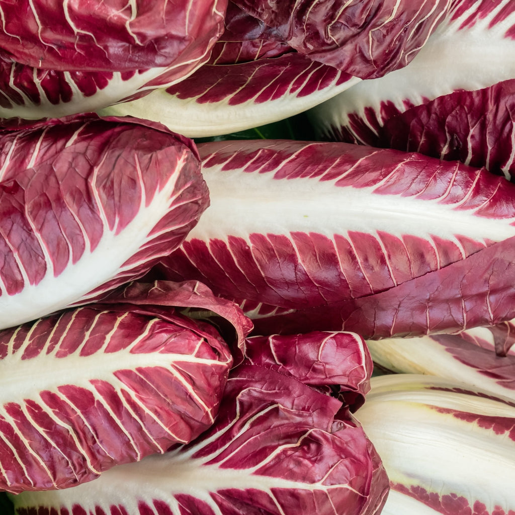 Red Chicory (140g) - Romaine Calm Scotland