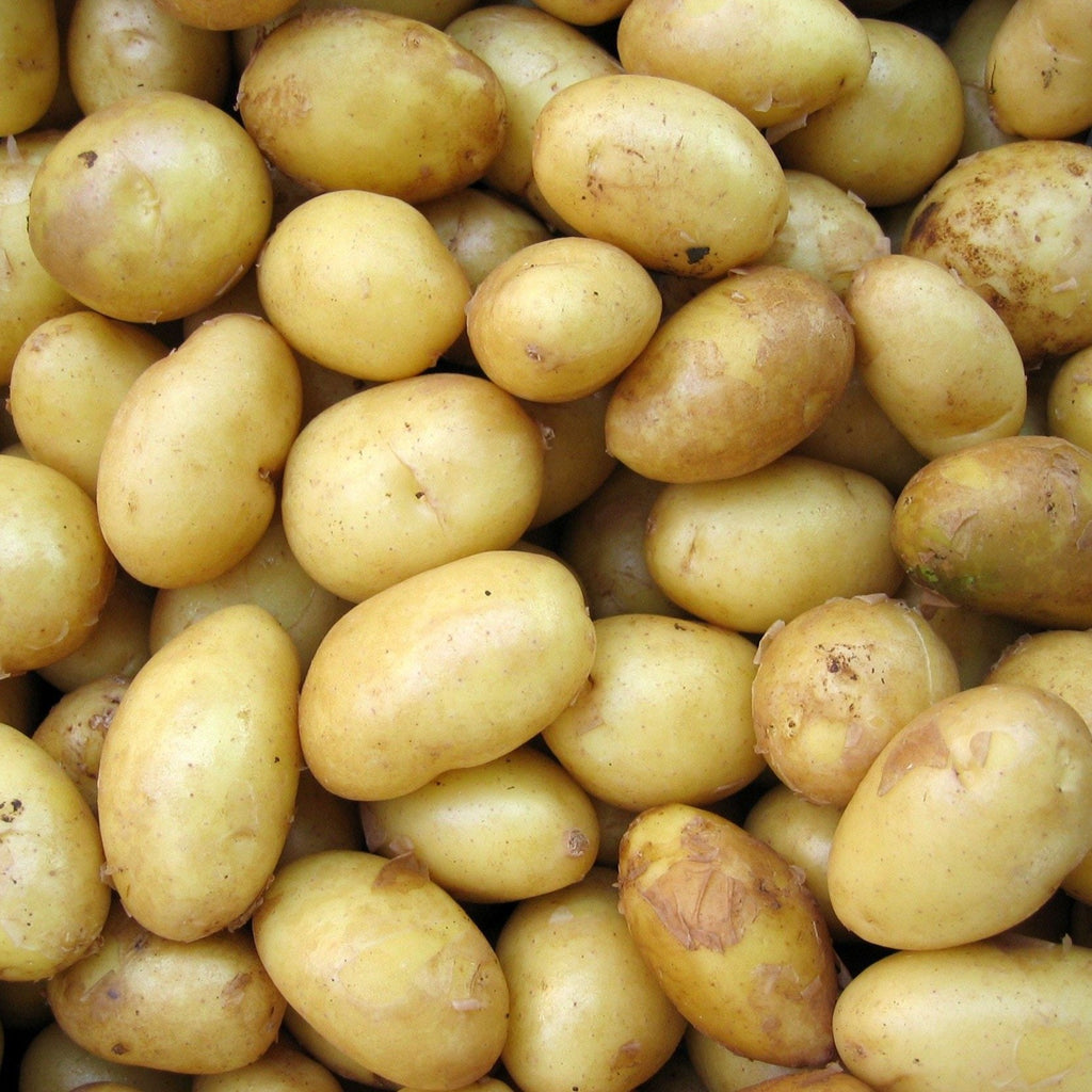 Salad Potatoes (1kg) - Romaine Calm Scotland