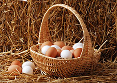 Brown and white eggs in basket in hay