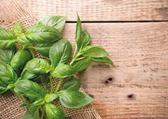 sprig of basil leaves