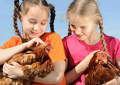 Two children holding ISA Brown chickens in backyard