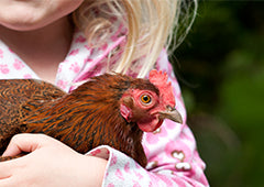 Best chicken breeds for kids