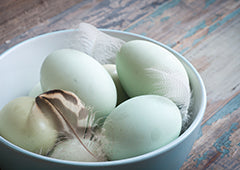 Blue Araucana chicken eggs in a bowl