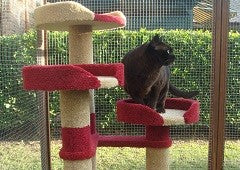 Dark Burmese cat on cat tree in Kitty Kastle enclosure