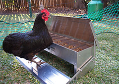 chicken using treadle feeder