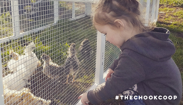chickens make the best pets for kids
