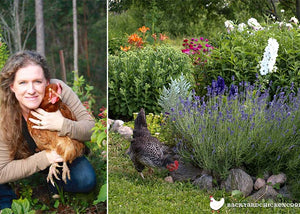 claire bickle with backyard chicken