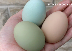 different coloured chicken eggs