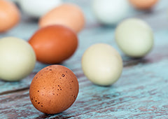 Different coloured chicken eggs and speckled eggs