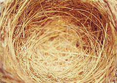 empty chicken nest