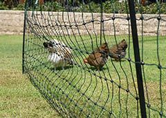 electric chicken fence in backyard with chickens