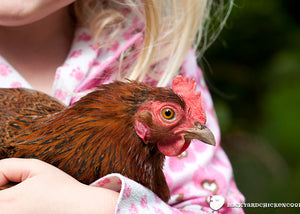 Pet Chickens for Kids - Feathered Fun for the Whole Family!