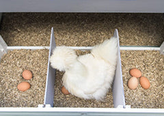 The Key To A Deep Chicken Litter System