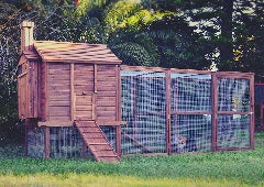 how-to-choose-the-perfect-chicken-coop